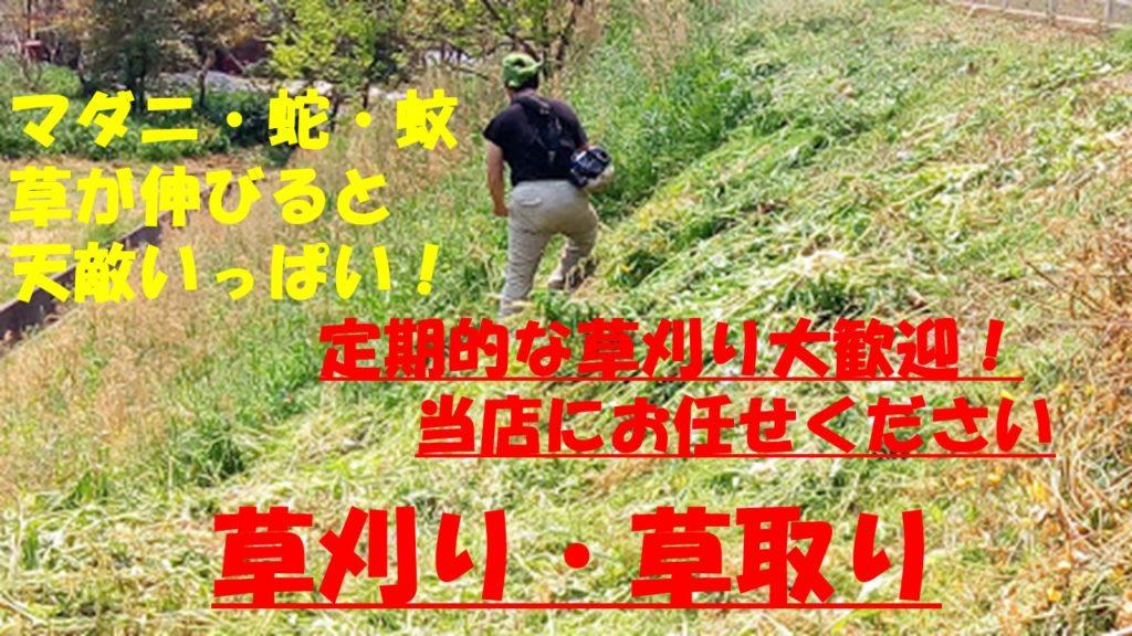 松江市・米子市周辺の草刈り、300円はあたり前